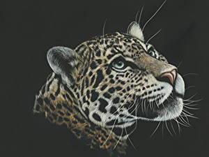 Фотография Рисованные Большие кошки Леопарды Голова На черном фоне животное