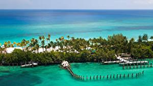 Картинки Тропики Море Курорты Пирсы Берег Пальмы Bahamas