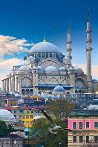 Обои для рабочего стола Стамбул Турция Здания Храмы Птицы Мечеть Облака Города