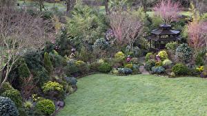 Фотография Англия Сады Весенние Пагоды Кусты Газон Walsall Garden Природа