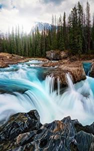 Фотографии Водопады Реки Пейзаж Канада Камни Леса Природа