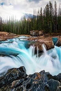 Фотографии Водопады Речка Пейзаж Канада Камень Леса