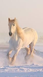 Фотография Зимние Лошади Снег Белый Животные