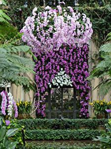 Фотография США Сады Орхидея Двери Longwood Gardens Природа