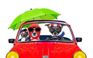 Фото Собаки Белый фон Двое Джек-рассел-терьер Очки Зонт Смартфон Смешные Животные