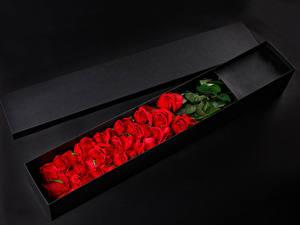Обои Роза На черном фоне Коробка Красных Цветы