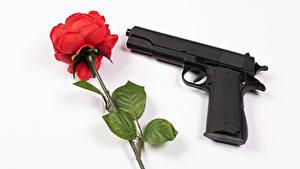 Обои Розы Пистолеты Белый фон Красная цветок