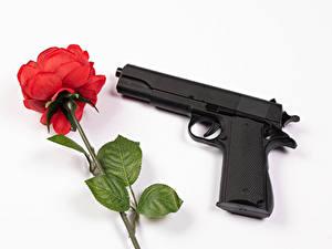 Обои Роза Пистолет Белом фоне Красная цветок