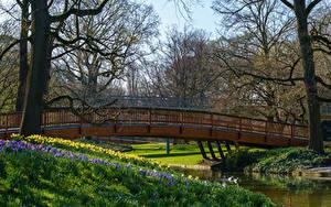 Фотография Германия Весна Парки Мосты Реки Деревья Karlsruhe Природа