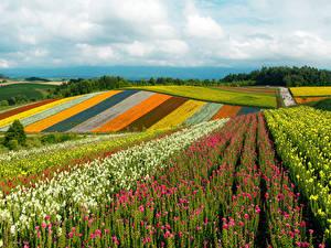 Обои Япония Поля Холмов Разноцветные Khokkajdo Природа