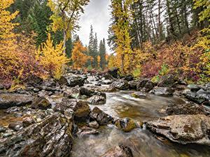 Обои Камень Осень Лес Штаты Мох Ручей Flathead National Forest, Montana state Природа