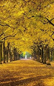 Картинки Осень Парки Деревьев Листва Аллеи