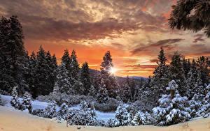 Фотографии Канада Парки Леса Зимние Рассветы и закаты Небо Йосемити Ель Снеге Природа