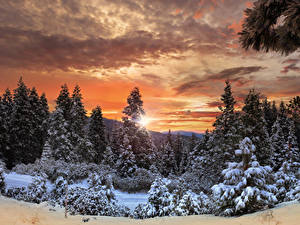 Фотографии Канада Парк Леса Зимние Рассветы и закаты Небо Йосемити Ель Снеге Природа