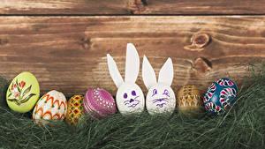 Картинки Праздники Пасха Кролики Доски Яиц Траве