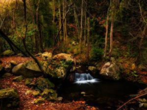 Фотография Испания Лес Водопады Камни Осенние Дерево Мха Vidra Catalonia Природа