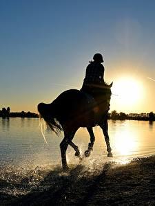 Фото Рассвет и закат Лошадь Озеро Брызги Силуэт животное