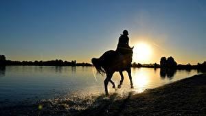 Обои для рабочего стола Рассвет и закат Лошадь Озеро Брызги Силуэт животное