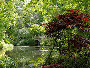Картинка Германия Парки Пруд Мосты Дерева Кустов Duisburg Природа