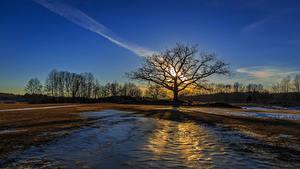 Обои Рассветы и закаты Поля Деревья Природа
