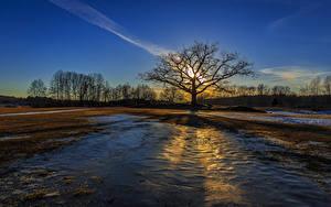 Обои Рассветы и закаты Поля Деревья