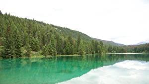 Картинка Канада Парки Озеро Леса Джаспер парк Alberta, Rocky Mountains