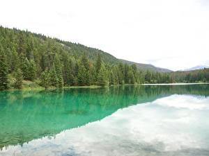 Картинка Канада Парки Озеро Леса Джаспер парк Alberta, Rocky Mountains Природа