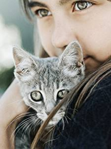 Фотографии Коты Миленькие Смотрит Девочка Котенок ребёнок Животные