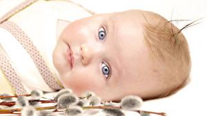Картинка Грудной ребёнок Взгляд Лицо Дети