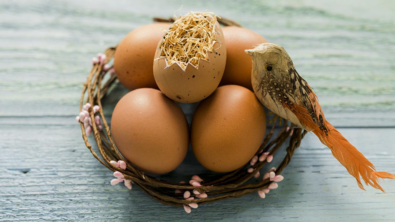 Фото Пасха Птицы яйцами гнезда Праздники Доски 1366x768 птица яиц яйцо Яйца Гнездо гнезде