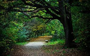Фото Парки Осень Дерево Листва Тропинка Скамья Природа