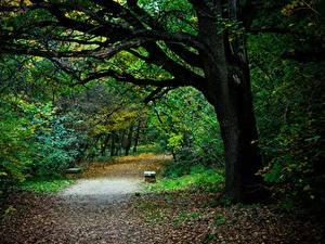 Фото Парки Осенние Деревья Листва Тропинка Скамья Природа