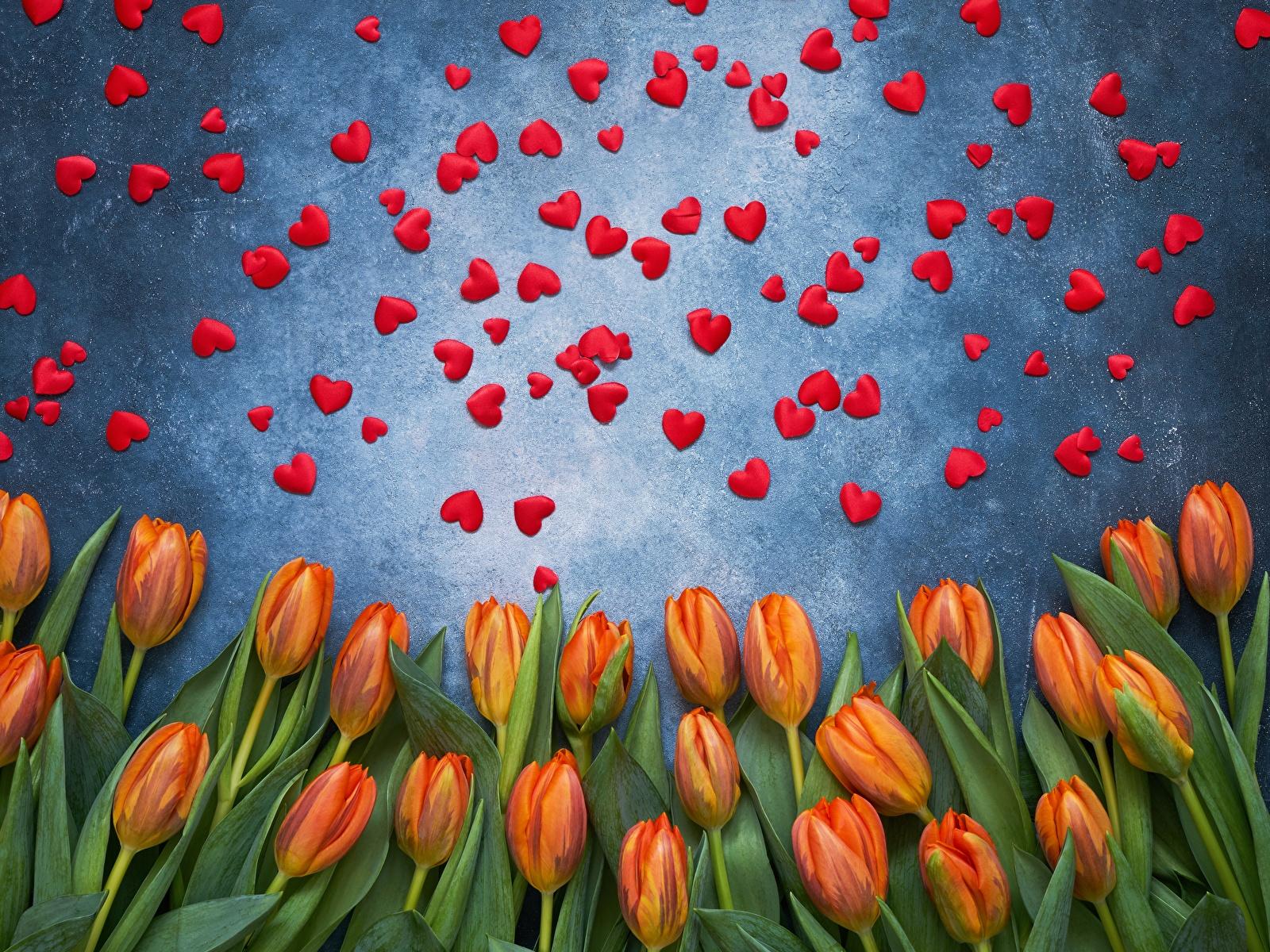 Фотография День святого Валентина сердечко тюльпан цветок 1600x1200 День всех влюблённых серце сердца Сердце Тюльпаны Цветы