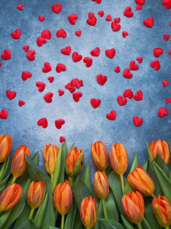 Фотография День святого Валентина сердечко тюльпан цветок 600x800 для мобильного телефона День всех влюблённых серце сердца Сердце Тюльпаны Цветы