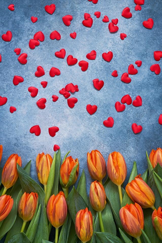 Фотография День святого Валентина сердечко тюльпан цветок 640x960 День всех влюблённых серце сердца Сердце Тюльпаны Цветы