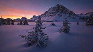 Обои Канада Парки Зима Рассвет и закат Банф Ели Снегу Утес Природа