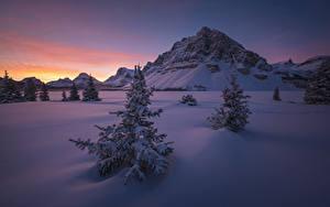 Обои Канада Парки Зима Рассветы и закаты Банф Ели Снегу Утес Природа