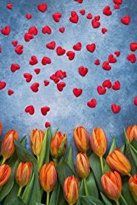 Фотография День святого Валентина Тюльпан Сердечко цветок