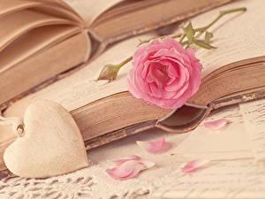 Фотография День всех влюблённых Розы Розовый Сердце Книги Лепестки цветок
