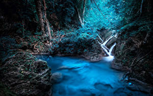 Фотография Таиланд Тропики Лес Kanchanaburi