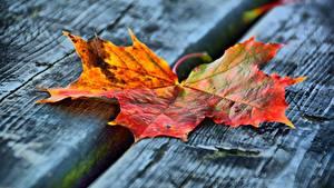 Картинка Осень Вблизи Доски Лист Клёновый