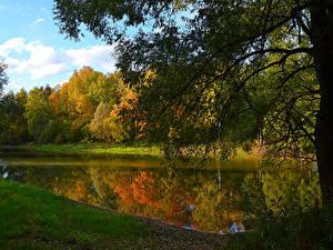 Картинка Россия Осенние Леса Озеро На ветке Moscow region Природа