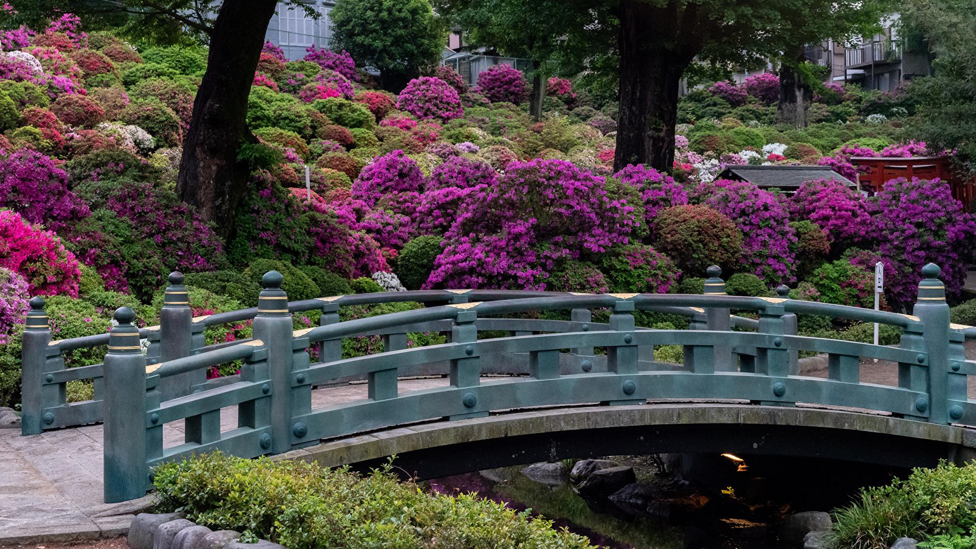 Фото Киото Япония мост Природа Парки Кусты 1920x1080 Мосты парк кустов