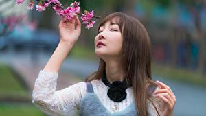 Картинка Азиатки Боке Ветвь Волосы Лица Милые Шатенка девушка
