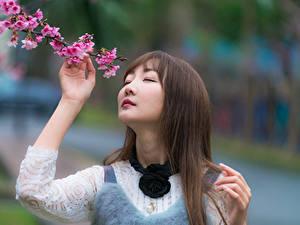 Картинка Азиатки Боке Ветвь Волосы Лица Милые Шатенка
