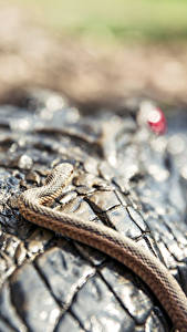 Фотография Крупным планом Крокодилы Змея Животные