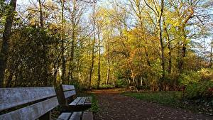 Обои Парки Осень Скамейка Деревьев Тропа Природа