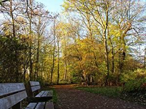Обои Парки Осенние Скамья Деревья Тропинка Природа