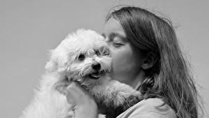 Обои Собаки Черно белое 2 Поцелуй Волосы Смотрит