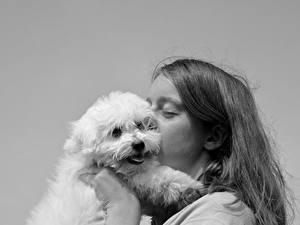 Обои Собаки Черно белое 2 Поцелуй Волосы Смотрит Животные
